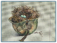 Bird Nest in Helmet